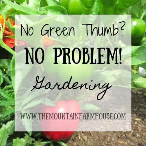 Pepper plants No Green Thumb? No Problem Gardening