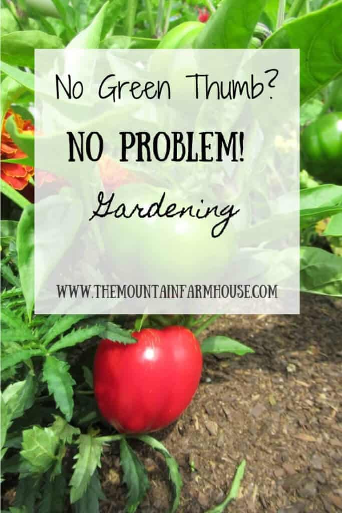 Peppers and marigolds No Green Thumb No Problem Gardening