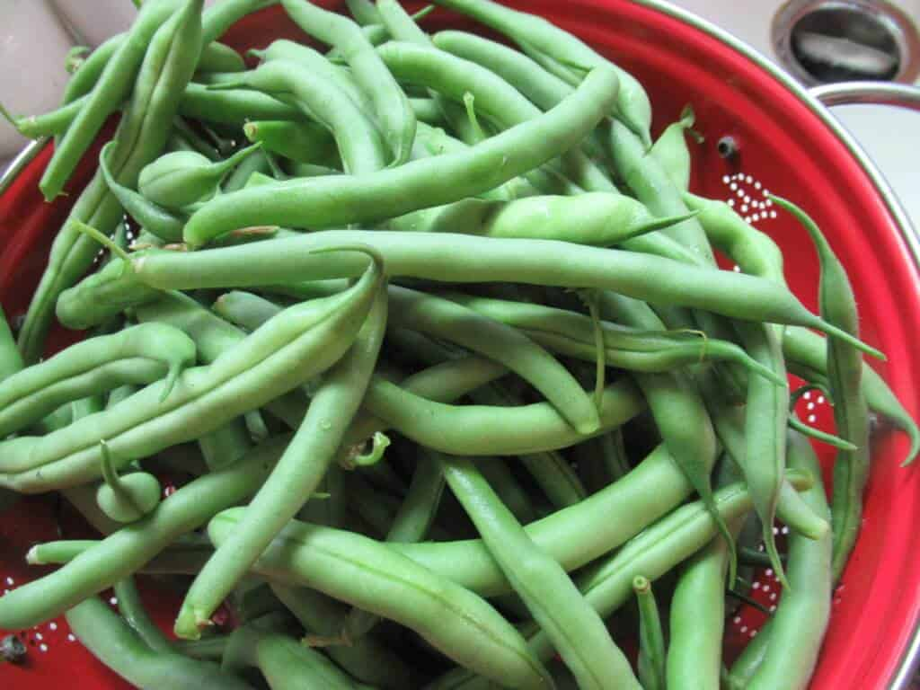 Beans ready to wash and trim
