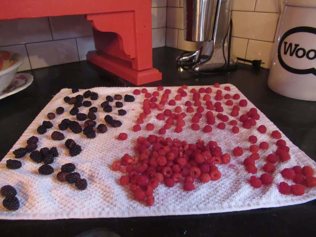 Washed, drained berries