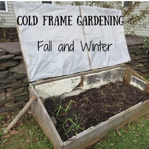 cold_frame_gardening