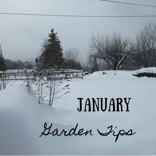 january_garden_tips