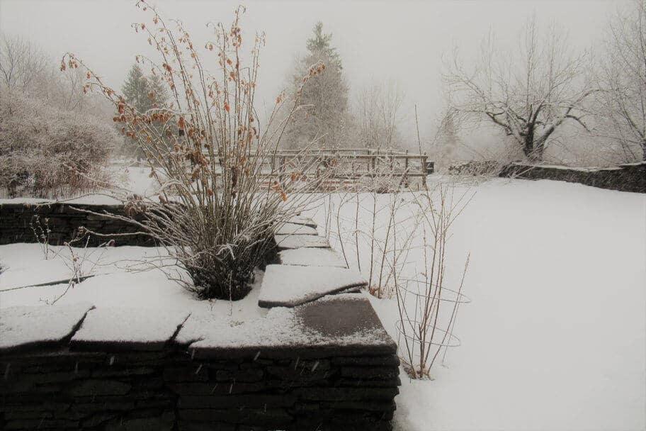 snowy gardens winter