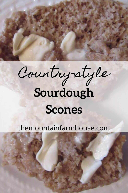 Buttered sourdough scones