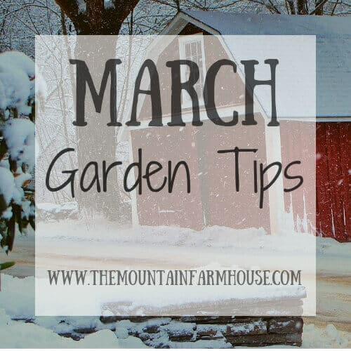 March Garden Tips Barn Tree Snow