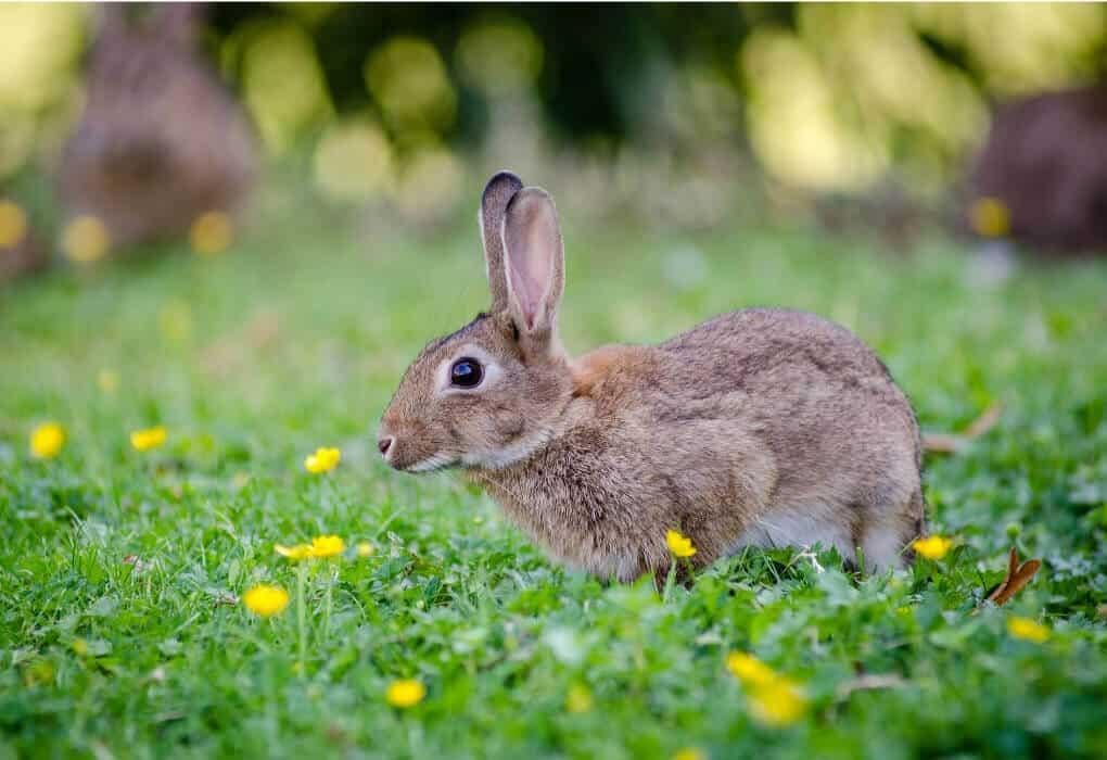 Image of Bunny in the flowers