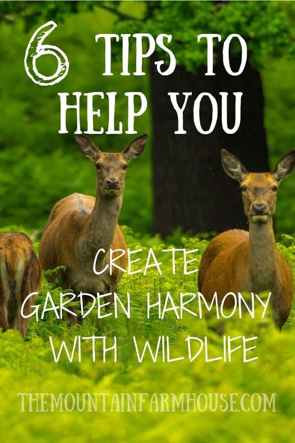 6 Ways to help you create garden harmony with wildlife