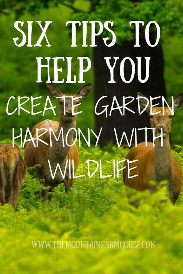 Six tips to help you create garden harmony with wildlife
