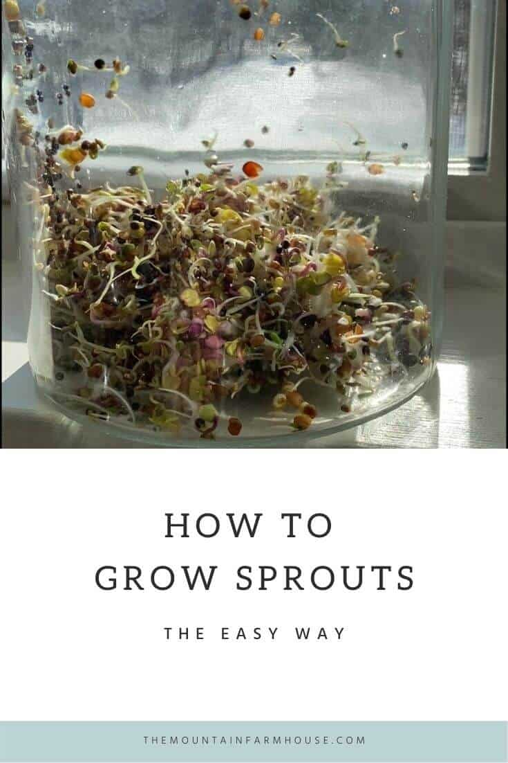 Pinterest Pin sprouts in a glass jar