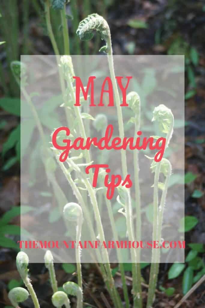 May Gardening Tips 2