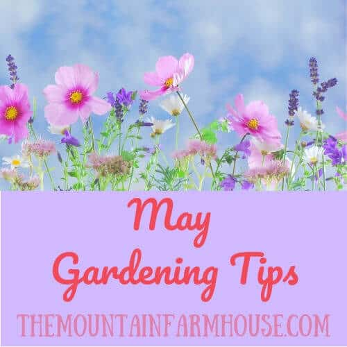 May Gardening Tips with flowers