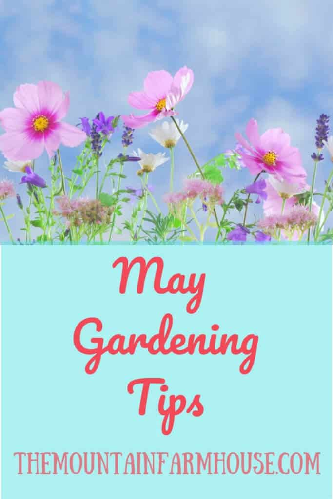 May Gardening Tips Flowers and blue sky