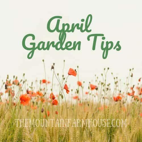 Image meadow flowers April Garden Tips