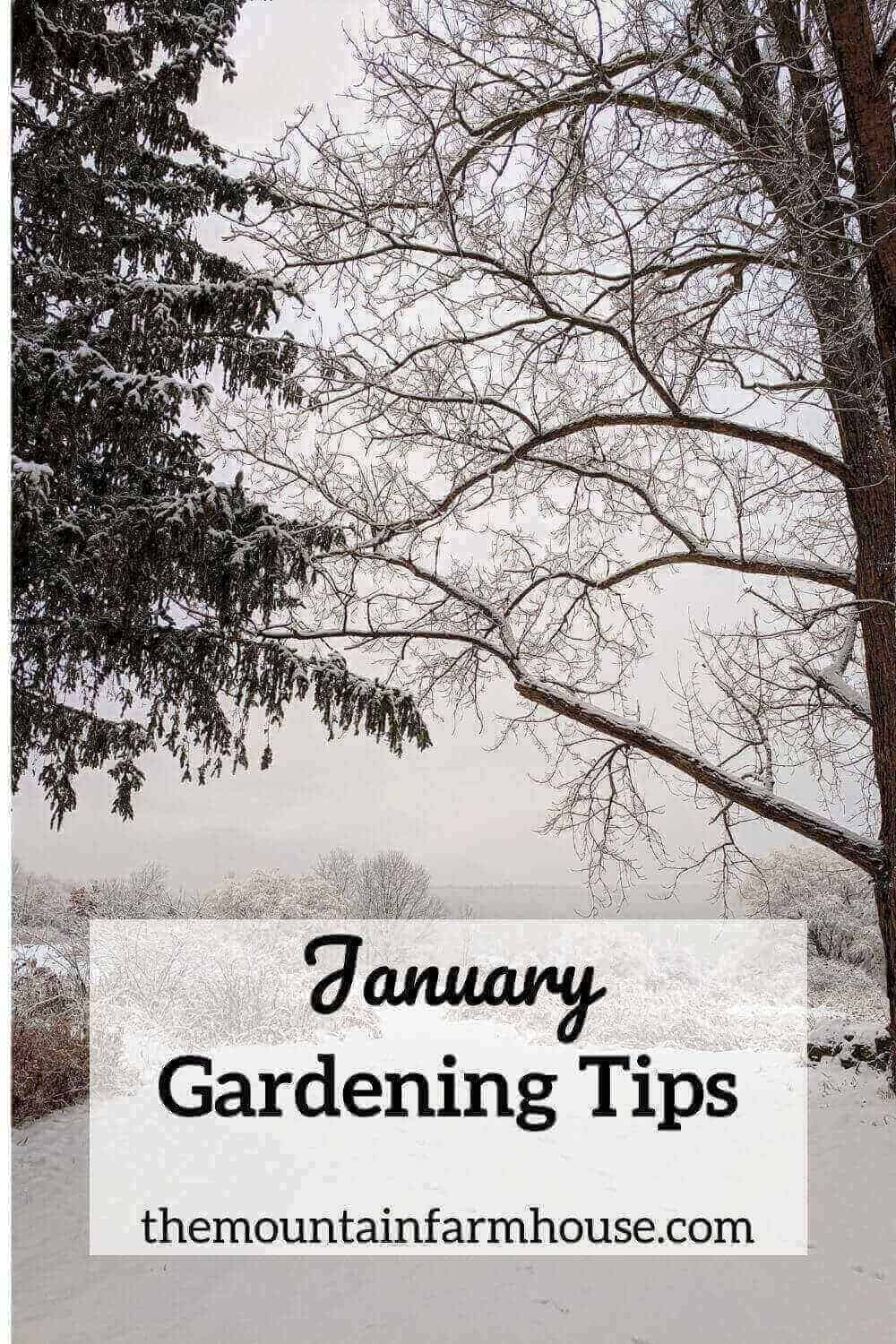 January Gardening Tips pin picture of snowy trees