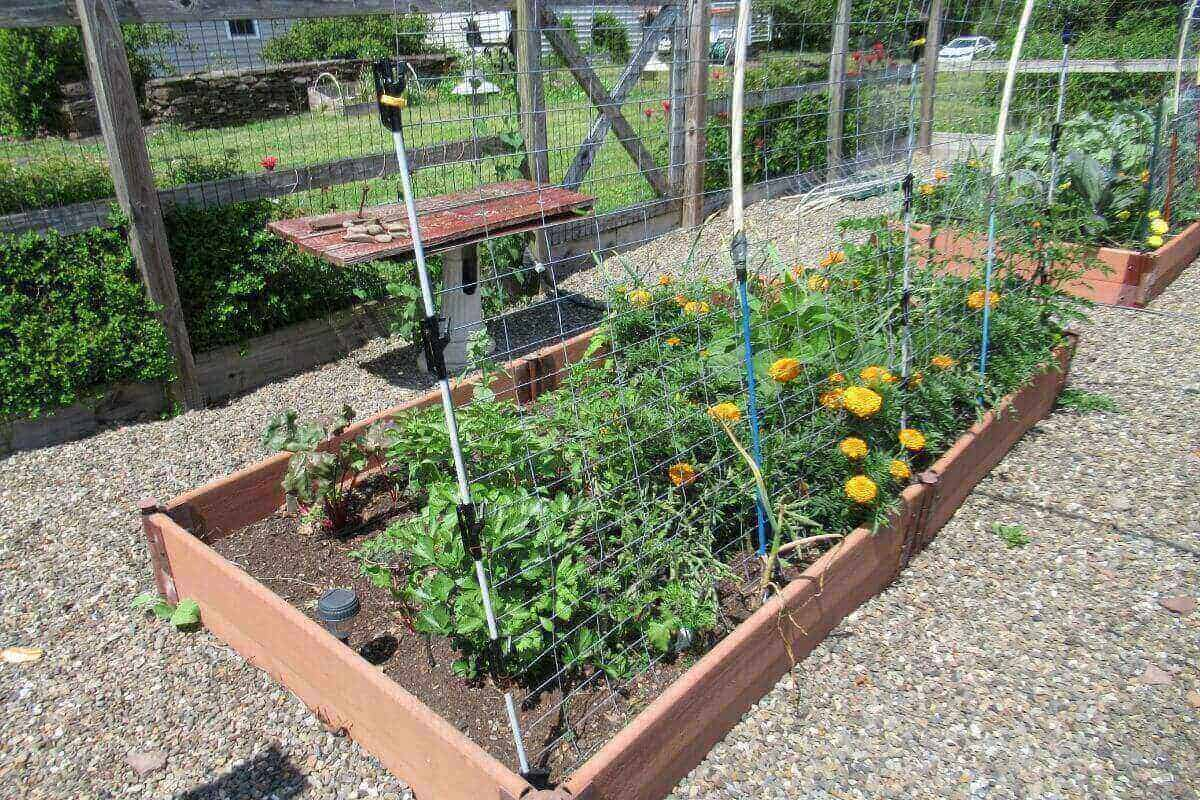 Garden bed with tomatoes, peppers, beets, carrots, basil, beans, celery