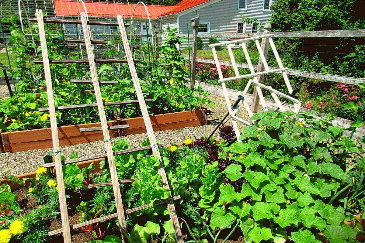 Raised garden bed with cucumbers, lettuce, chard