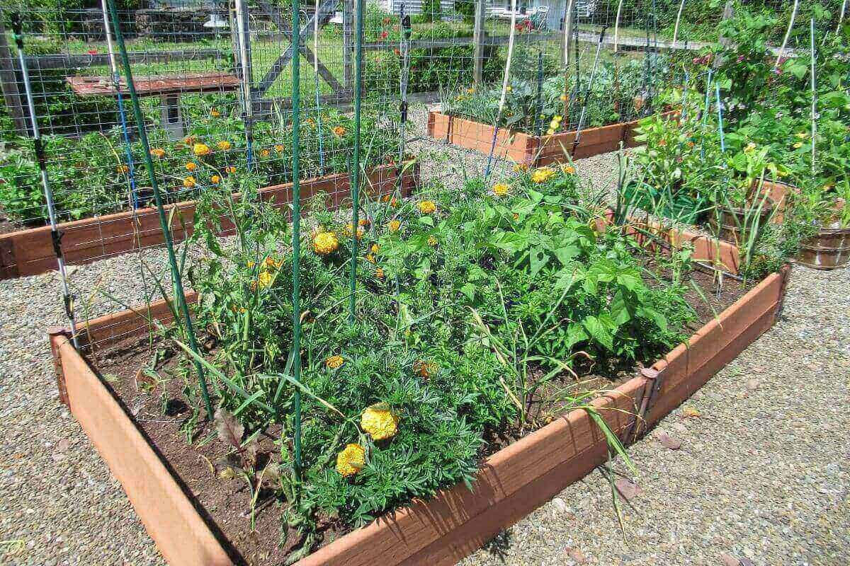 View of vegetable garden bed with tomatoes, peppers, carrots, garlic, basil, beets, and beans