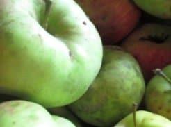 Apples featured image for September garden tips