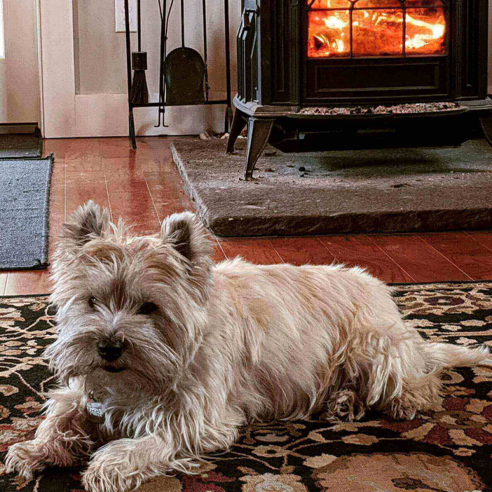 Finn the dog by fireplace