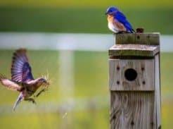 Birds with birdhouse