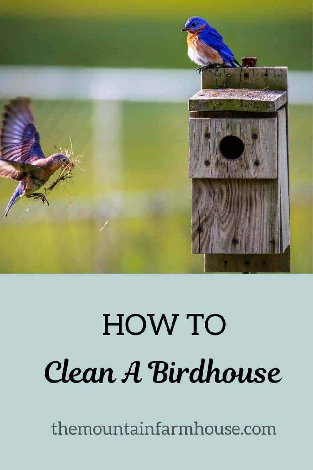 Pinterest How to Clean a Birdhouse birds and birdhouse