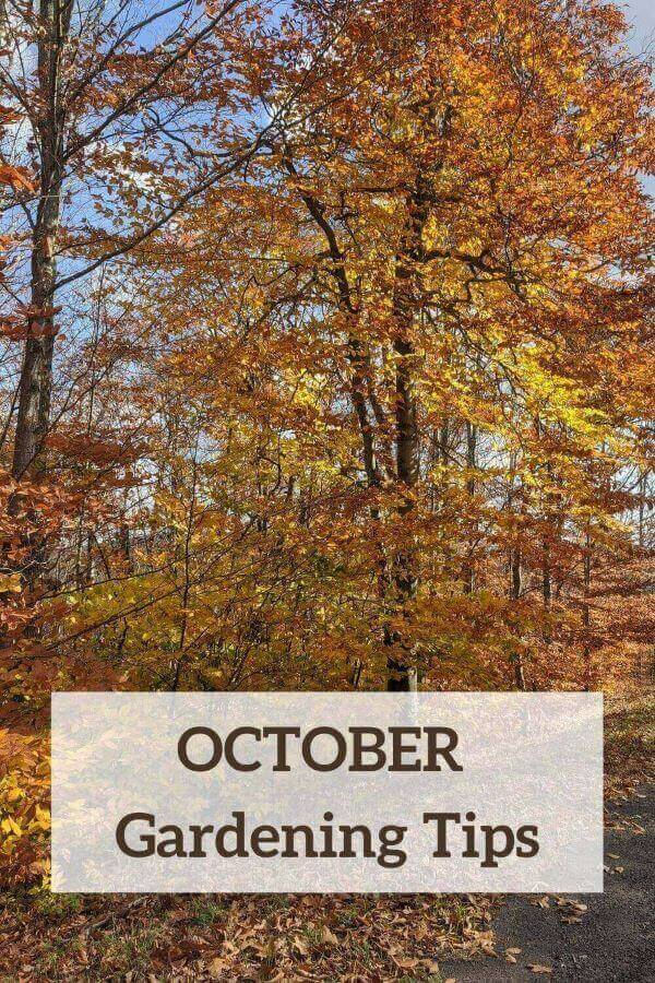 Autumn-leafed tree Pin for October Gardening Tips