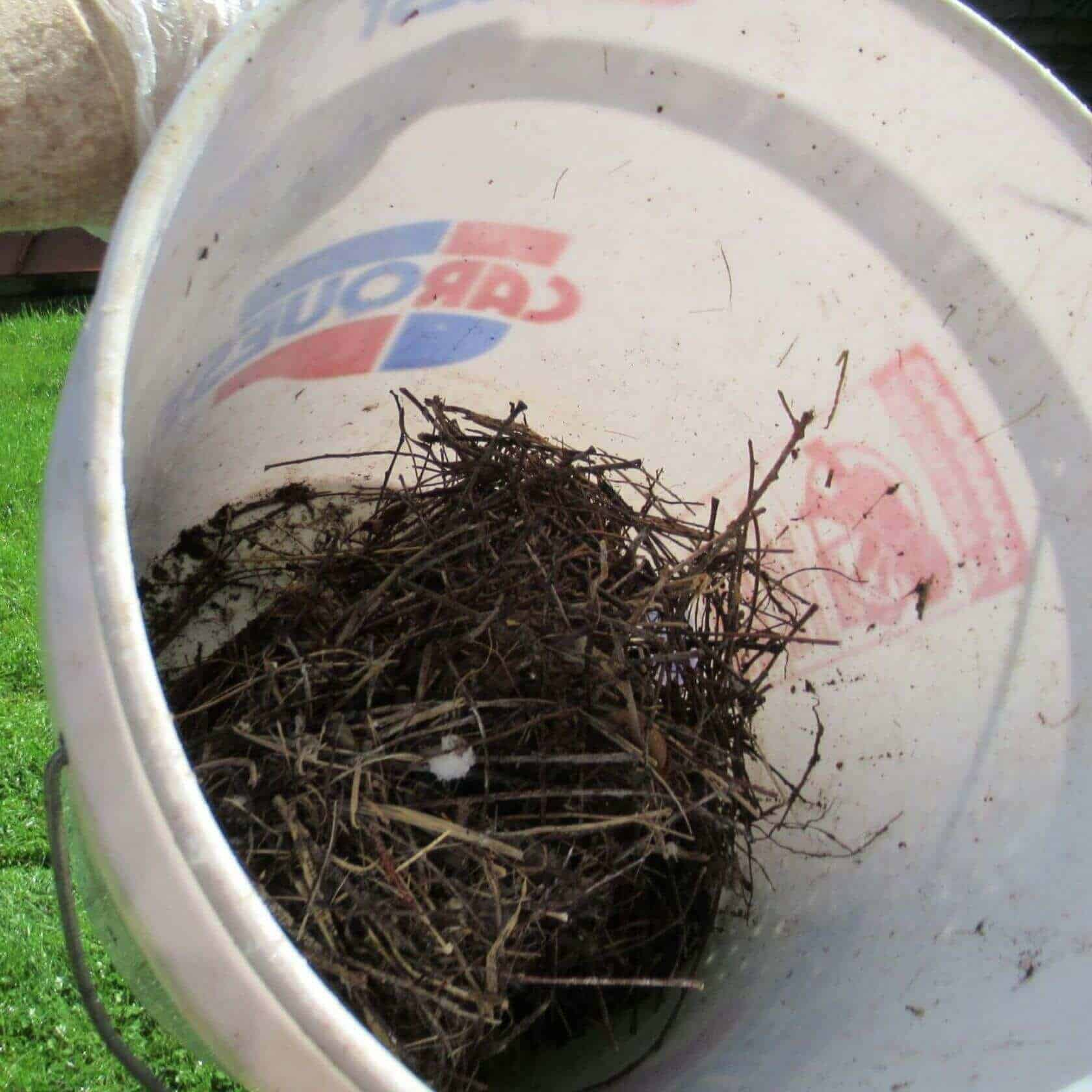 Old bird nest in bucket