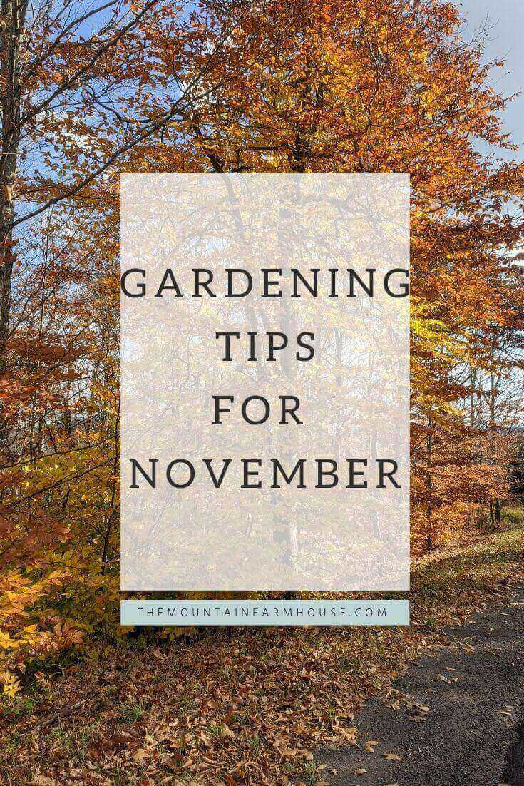 Gardening Tips for November Pin with Autumn tree
