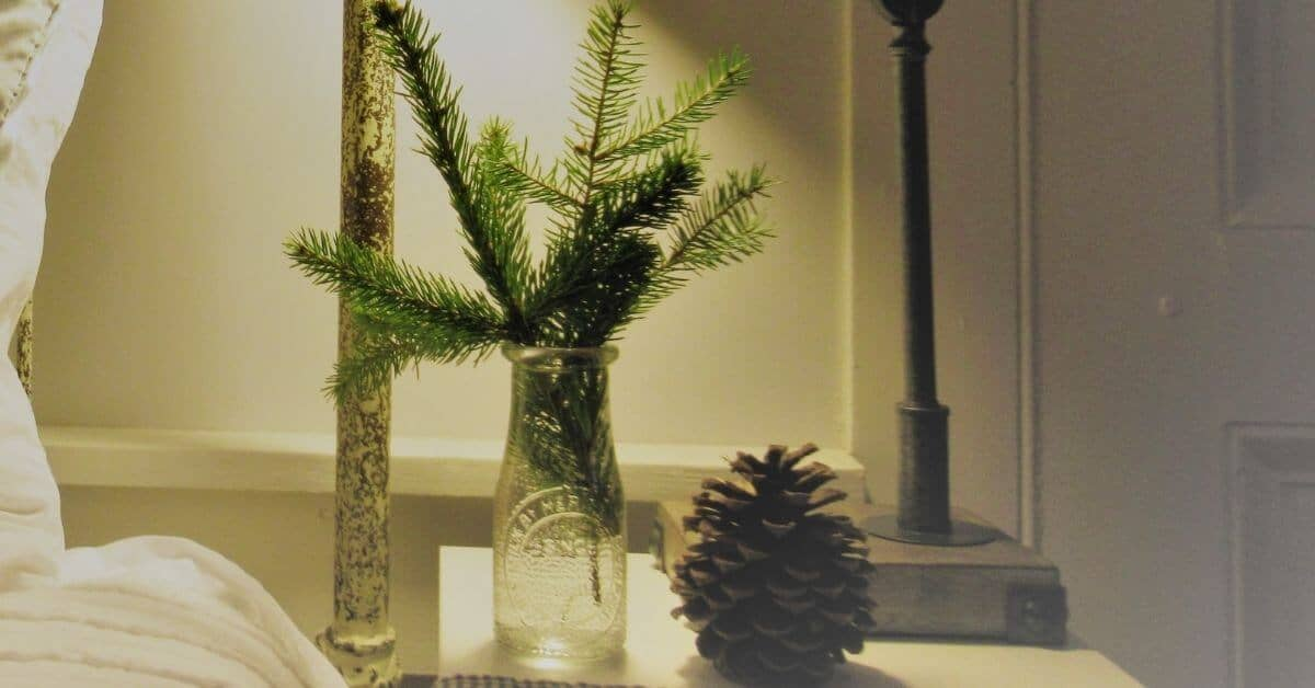 """Pine branches in milk bottle """"vase"""" with pine cone"""