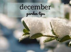 December Garden Tips picture of snowy branch