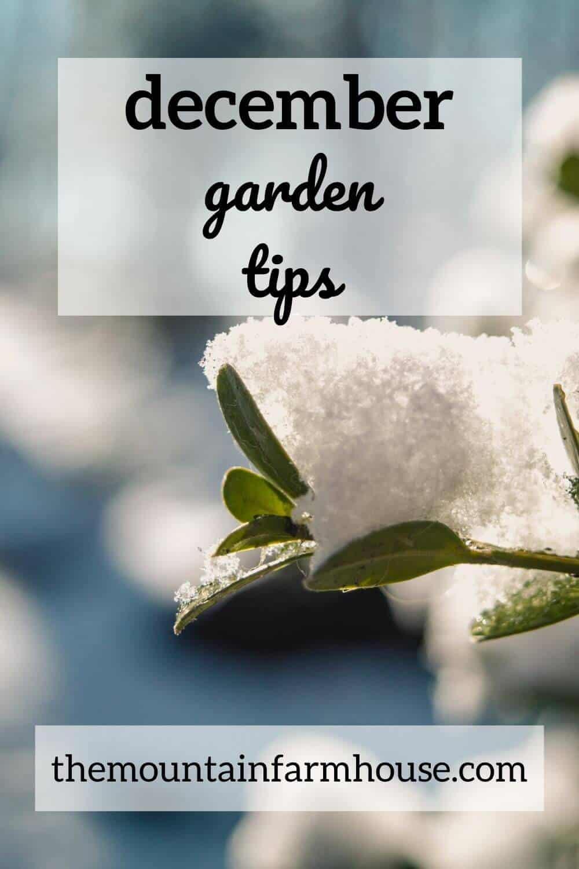 December garden tips pinterest pin with snowy branch