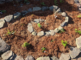 spiral herb garden with stones and mulch