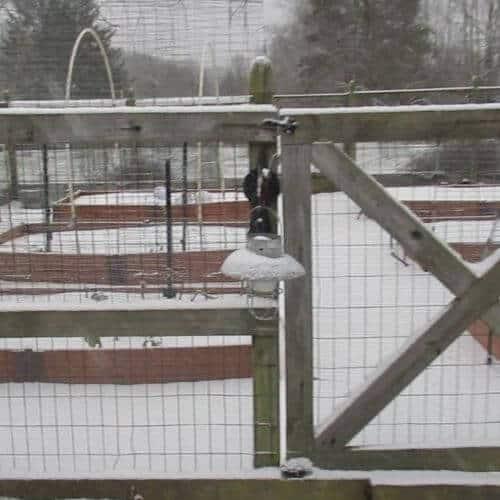 Snowy Vegetable Garden - January Winter Garden