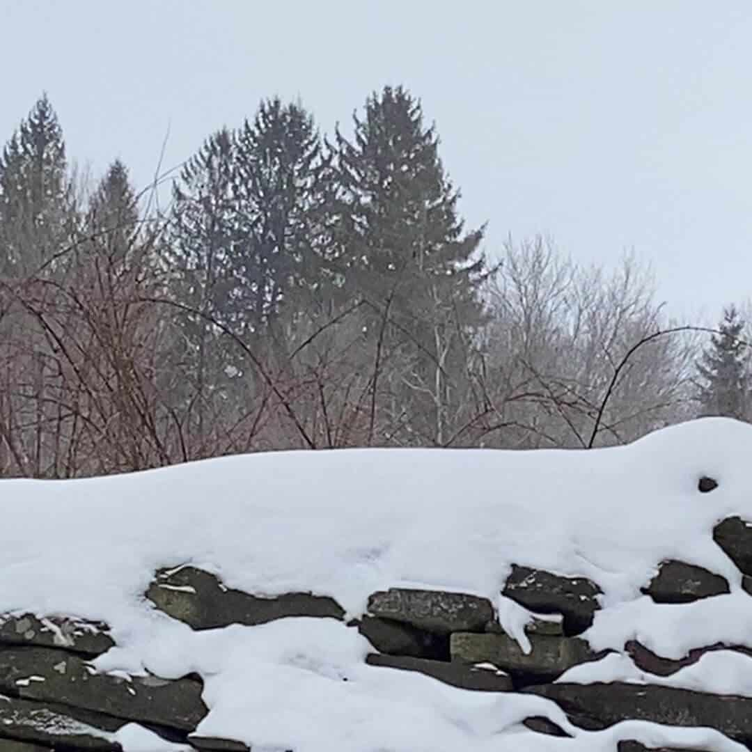 snowy stone wall with blackberry brambles and trees