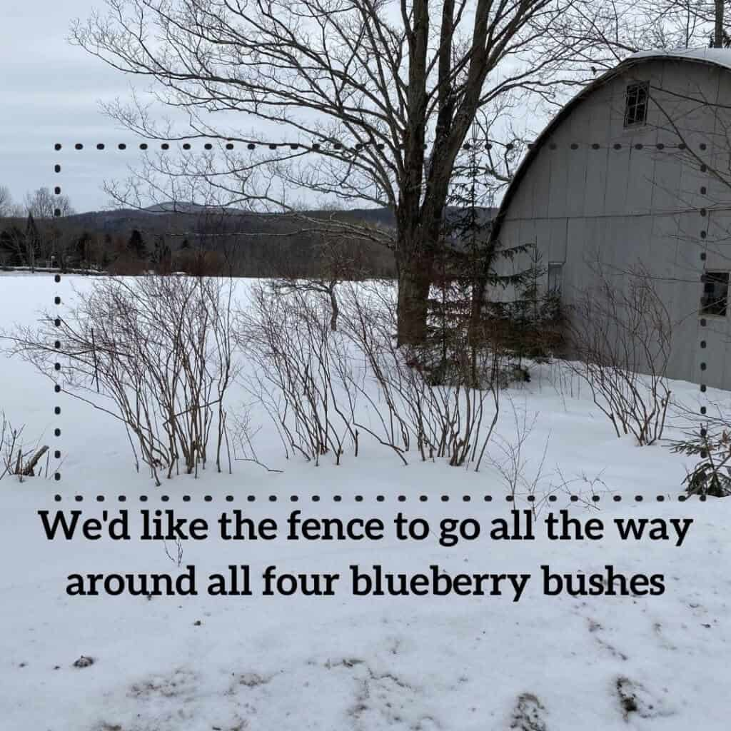 Blueberry bushes and trees behind quonset in snow showing fence placement