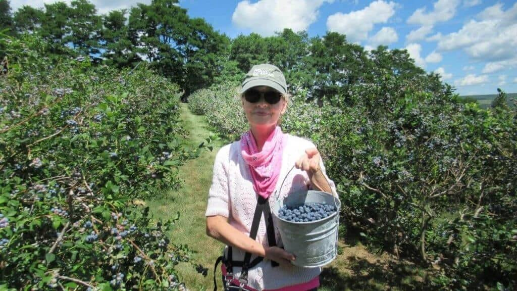 Woman holding bucket of blueberries in blueberry field
