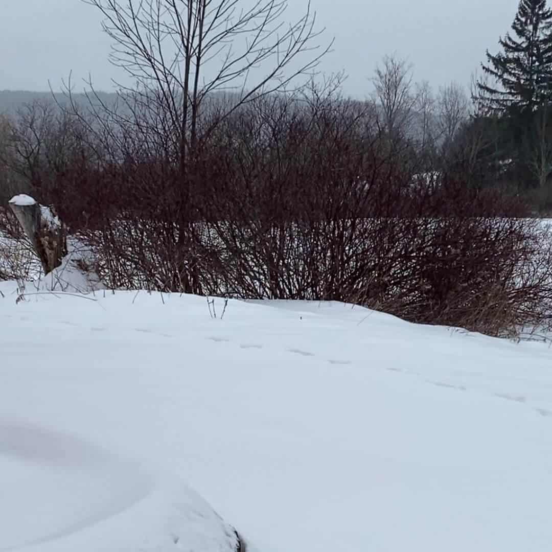 Snowy farm garden