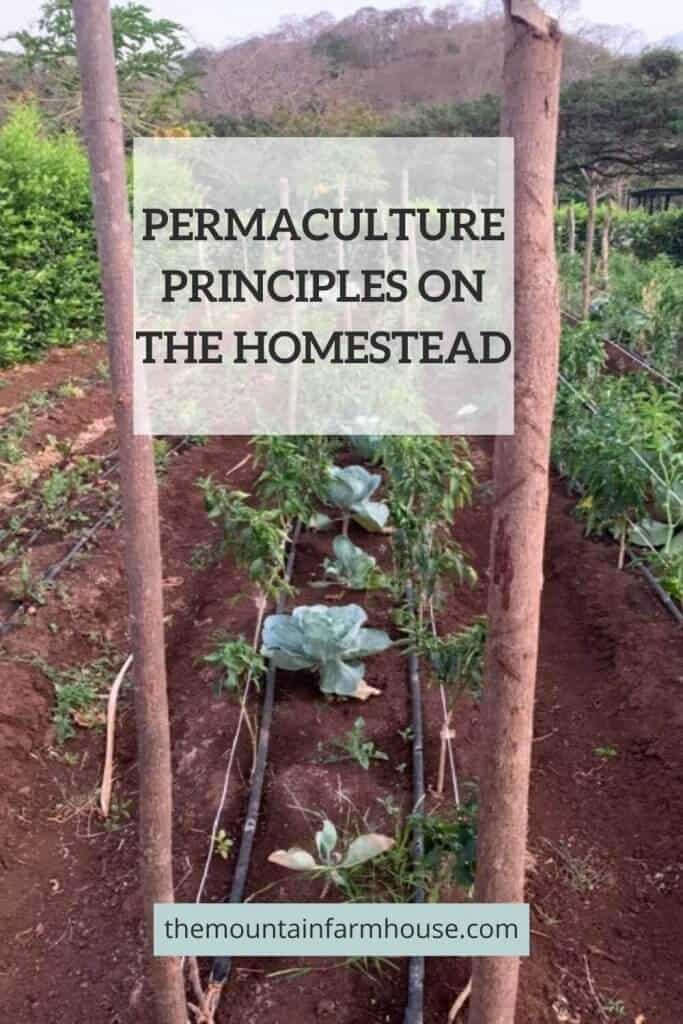 Pinterest Pin Permaculture principles on the homestead vegetable garden with irrigation and mountain