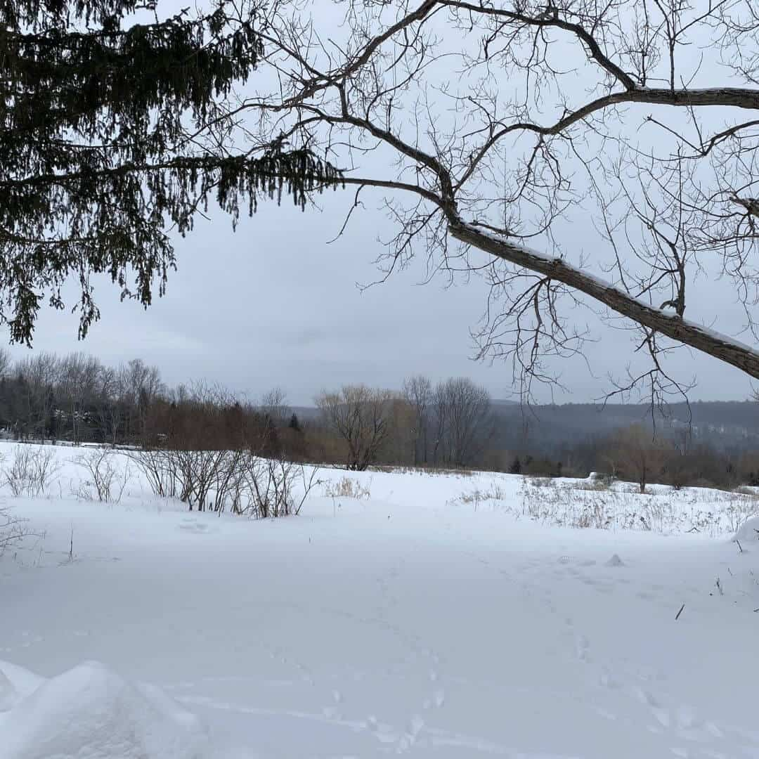 Winter trees and pond view